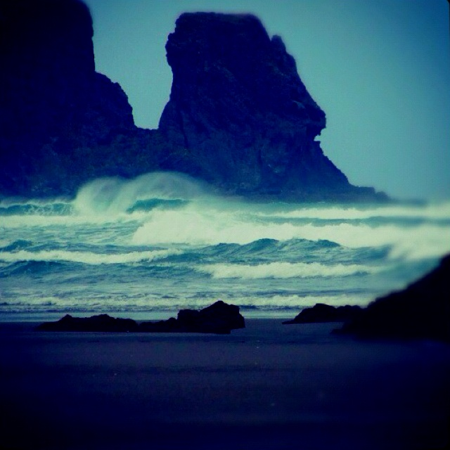 Bethells Beach  New Zealand