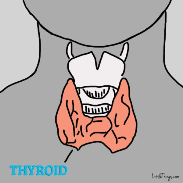 12 Signs There Is Something Wrong With Your Thyroid Gland - do you know the signs?