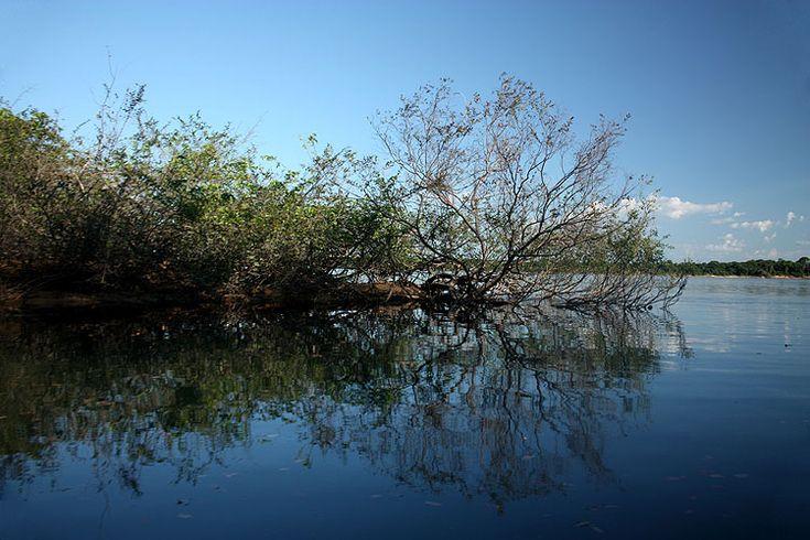 Entrada ao Canal Água Boa, uma das atrações naturais que podem ser observadas durante os passeios pelos rios de Boa Vista, capital de Roraima. Floresta Nacional de Roraima. Bioma: Amazônia.