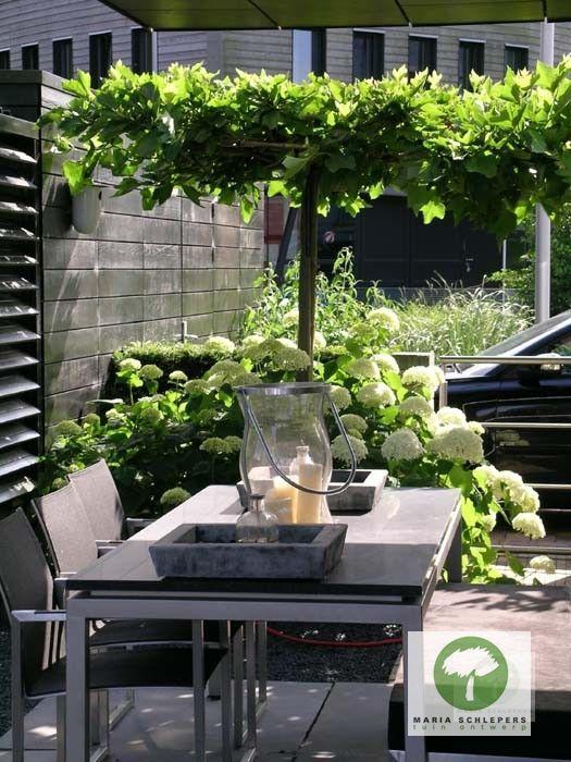 Onderhoudsarme tuin - Maria Schlepers Tuinontwerp Dronten Flevoland