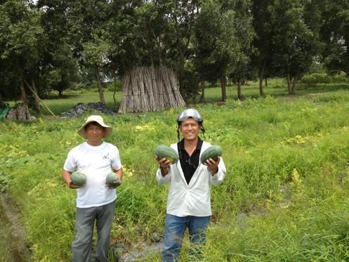 A natural farm in South of Vietnam close to Ho Chi Minh City (This farm is by Sai Gon River). We are trying to build and preserve a natural farming for living and home stay tourism. Our goal/investment is to keep and make our farm as organic field. We need volunteers and help to make this happened. - Need help to start, to build together in a fun activities environment - We have 2 farmers on-site and other helpers live around this area - Currently planting Rice, vegetables as cucumber…
