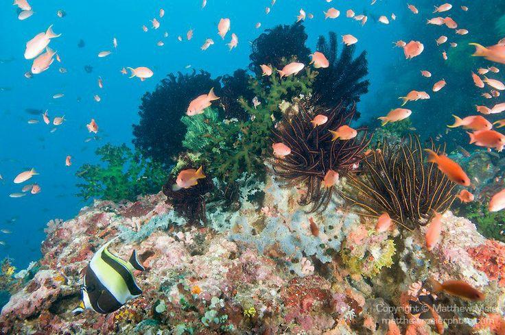 Coral sea in India