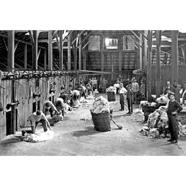 Shearing Shed Australia. Exact date unknown. Photograph scanned from glass plate negative Sydney Morning Herald photograph by George BELL
