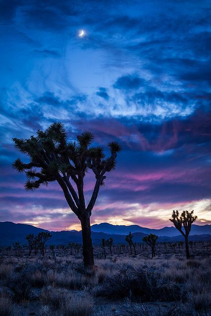 Joshua Trees. I hopefully I will see this part of the country this summer