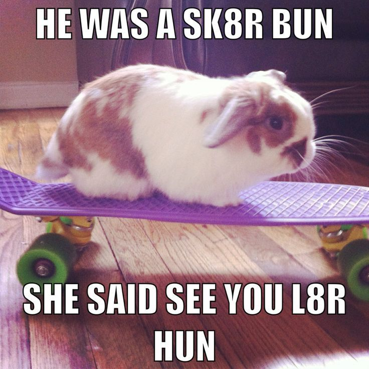 bunny owner meme - Google Search