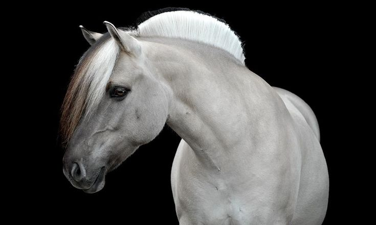 Portfolio Paardenfoto's « Hypo Focus Paardenfotografie