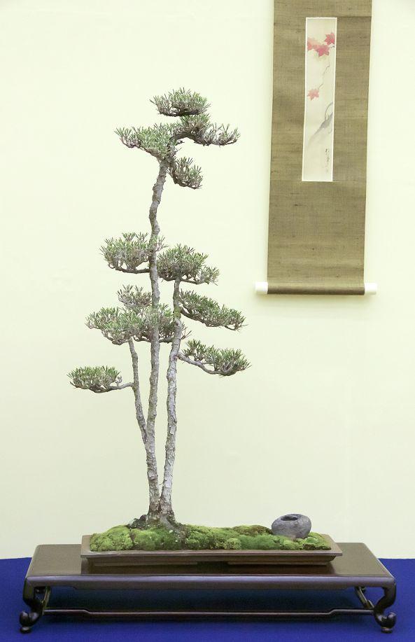 241 besten garten bonsai in schale bilder auf pinterest for Bonsai pflanzen
