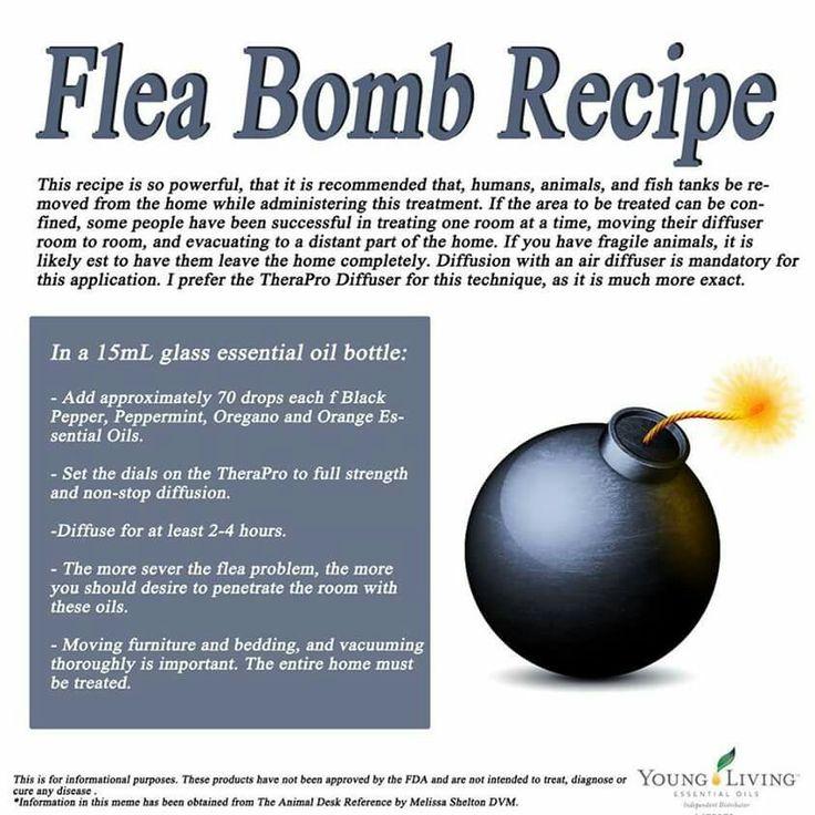 Flea Bomb Essential Oils For Fleas Essential Oils Dogs