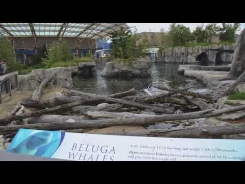 about Mystic Aquarium - Mystic, CT on Pinterest Mystic aquarium ...