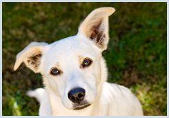 Donate Now | Sandton SPCA