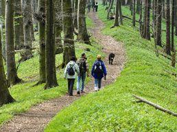 Wandern auf dem Hermannsweg durch den Naturpark TERRA.vita, Quelle: Naturpark TERRA.vita