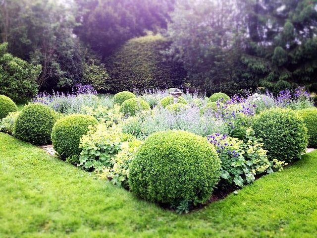 Love the contrasting shapes and two-tone palette of this garden's rounded boxwoods, lady's mantle and Russian sage.