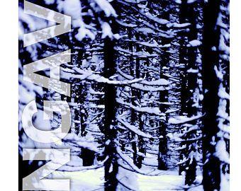 Collection Ungava: La forêt boréale en hiver. Photographie sur film originale imprimée sur bois.