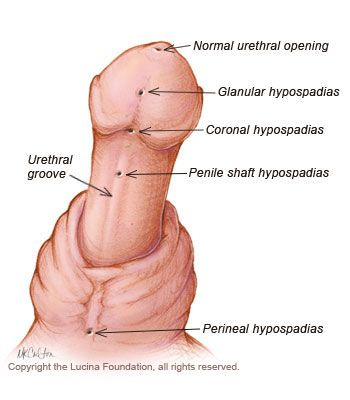 Glanular cells in vagina