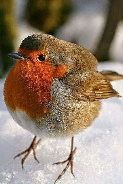 موسوعة أجمل صور طيور برية نادرة بألوان رائعة مداد الجليد Beautiful Birds Pretty Birds Colorful Birds