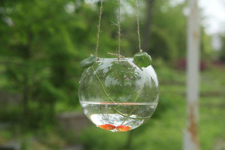 Best 25 hanging glass terrarium ideas on pinterest for Vase aquarium rond