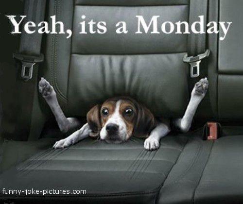 Monday Morning Humor Quotes | Hilarious Monday Blues Dog Joke Meme Image