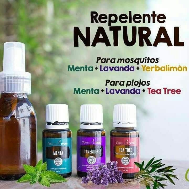 Image result for repelente de mosquitos young living