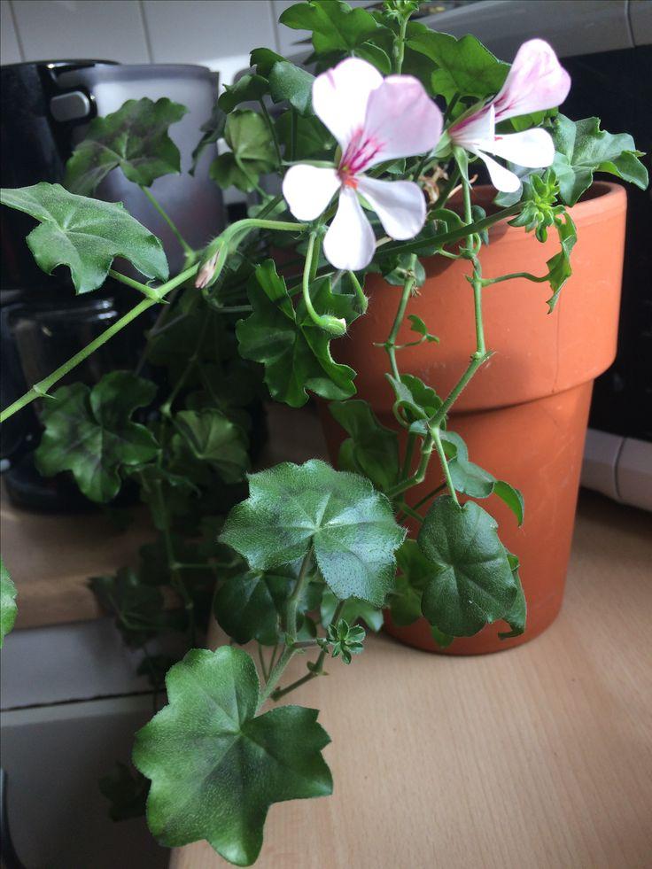 Viletta white