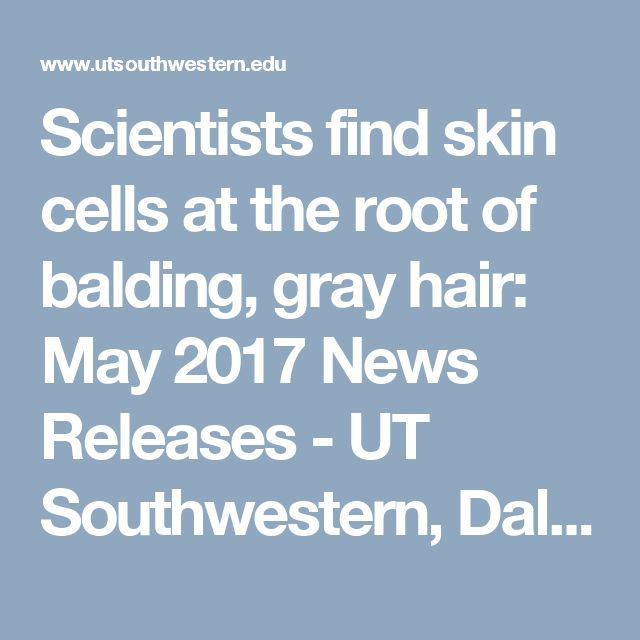 Scientists find skin cells at the root of balding, gray hair: May 2017 News Releases - UT Southwestern, Dallas, Texas