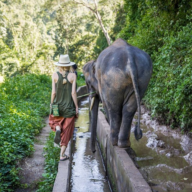 Evening walk with gentelman.  #elephant #walk #gentelman #jungle #liveinthejungle #wildandfree #wild #happy #journey #busemprzezswiat #animals #thailand #elephantsanctuary #polishblogger #travelblog #travelinstagram #travelinsta #travelinstagrammer #amazingthailand @wilderness_culture