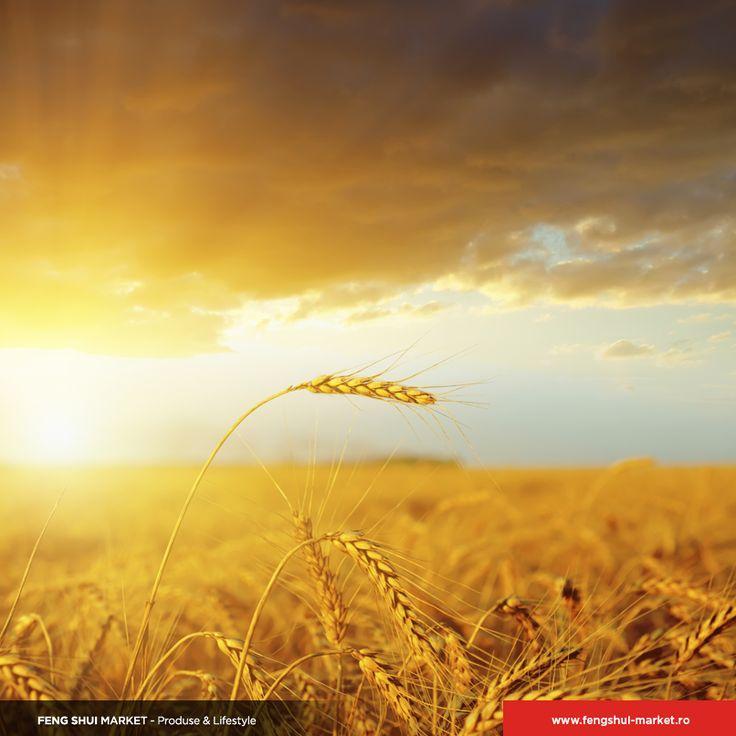 Anului Calului • Ziua 8  Astăzi se sărbătorește ziua recoltelor, o zi care le aduce aminte oamenilor să prețuiască roadele pământului. În această zi, părinții le vorbesc copiilor despre importanța prețuirii pămîntului, a plantelor ce cresc din el, a muncii care se depune pentru a crește recoltele.  Astăzi nu este o zi bună pentru cei născuți în zodia Iepure, în schimb este o zi foarte bună pentru cei din zodia Șobolan.  Este o zi norocoasă pentru care au ușile casei îndreptate înspre N și E.