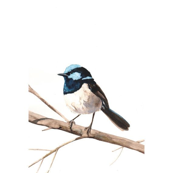 Fairy Wren Bird Art Archival print of watercolor painting A4 wall art print - bird art - art print - wildlife print
