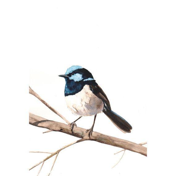Fairy Wren Bird Art Archival print of watercolor painting A4 wall art print - bird art - art print - wildlife print