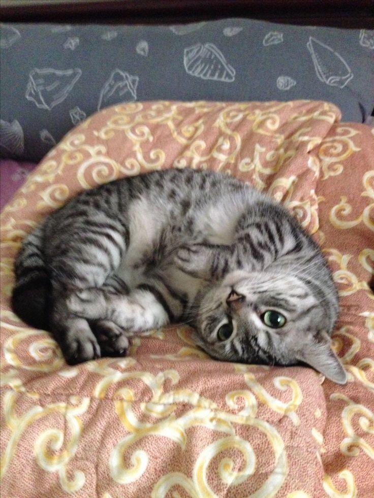 Wanna sleep with me human?