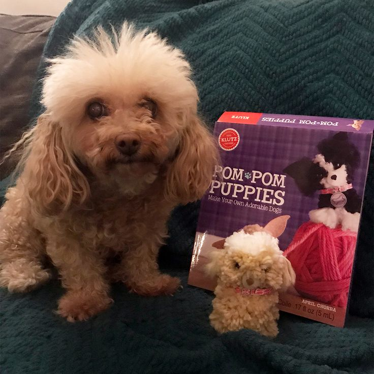 Our Marketing Manager Brittany made her dog Nikki's twin with our Pom-Pom Puppies kit