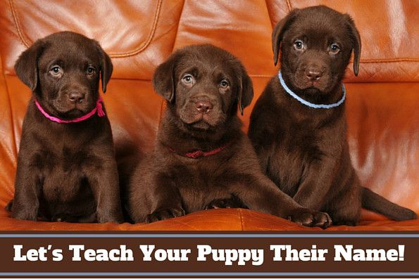 Most people don't know how to teach a puppy its name...or how to use it properly. Read 10 easy steps to teaching your puppy's name and how you should use it