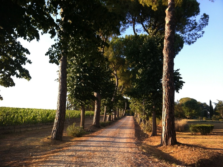 the access road to Villa Acquaviva    il viale d'accesso a Villa Acquaviva