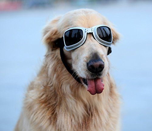 09cd7102d1 ... Large Dog Goggles Sunglasses UV Goggles Goggles Golden Retriever Goggles  Square     Check this awesome product by …