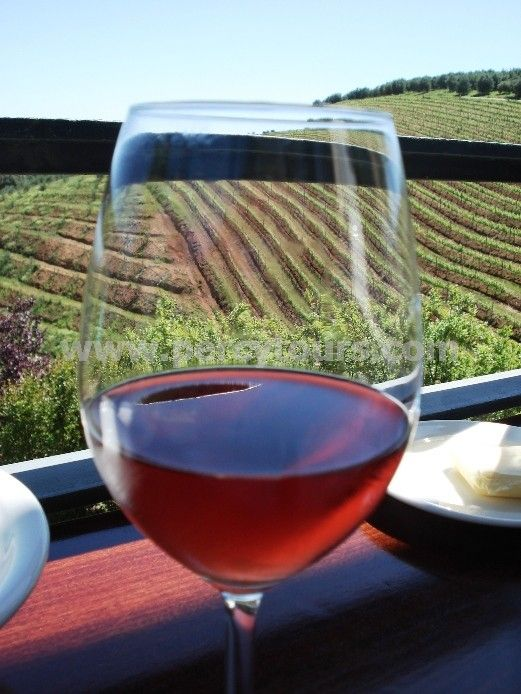 Wine Tours, Wineries, Wine Tasting of Hermanus with - http://www.percytours.com/wine-tours--wine-tasting.html