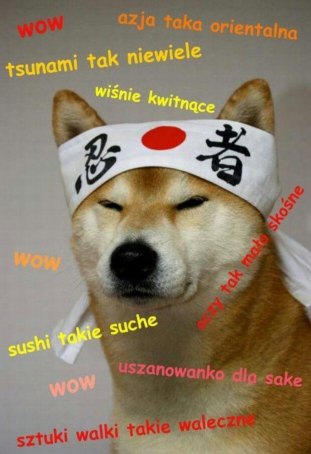 Pieseł (Doge)