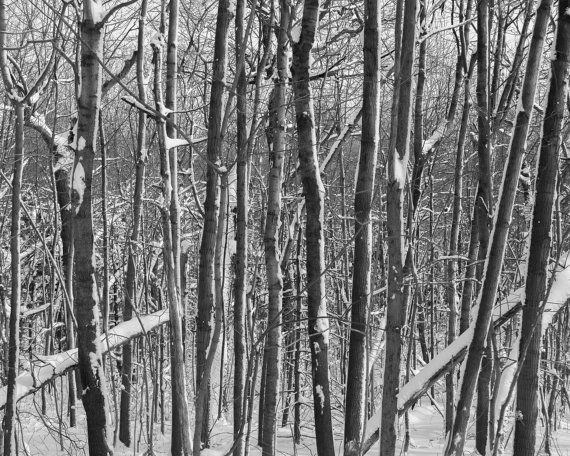 Abstract photograph of trees covered in show. Close up of tree branches. Taken in Montreal, Quebec. Please note, the three images are a little
