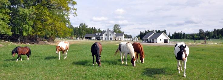 Vita drömgården hästar stall boningshus Horses stable and house in white