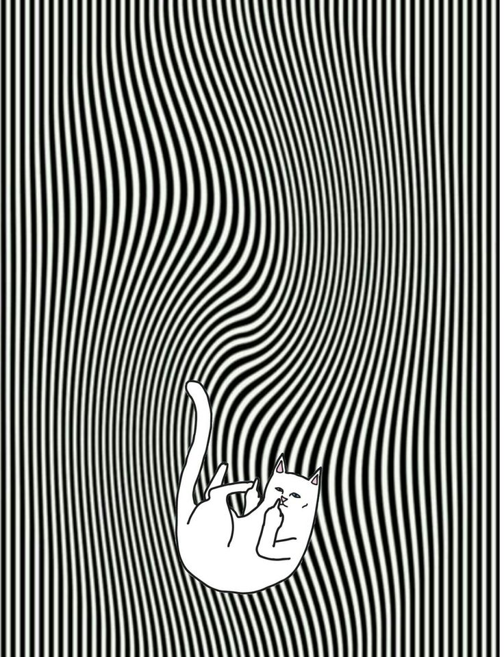 ripndip middle finger cat wallpaper iphone Ripndip