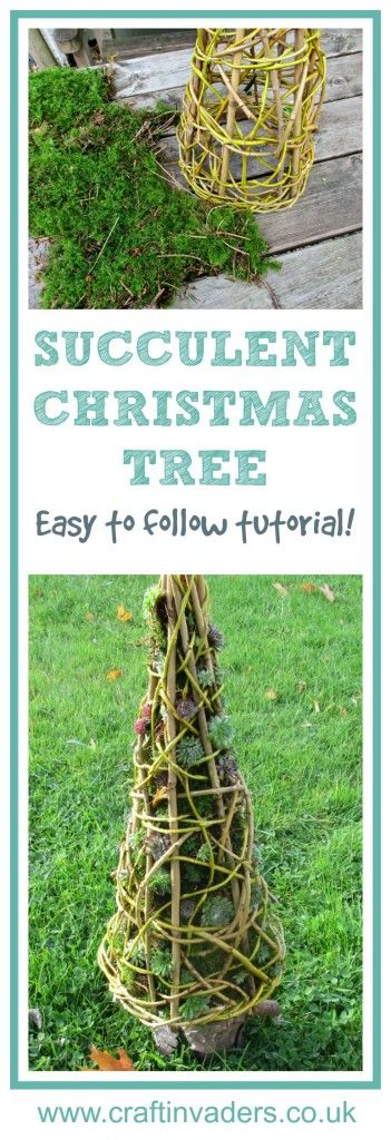 We turned our simple home-made willow cone into a wonderful Succulent Christmas Tree - This wonderful centrepiece can be used both in the house and garden, and would make a fabulous original gift.