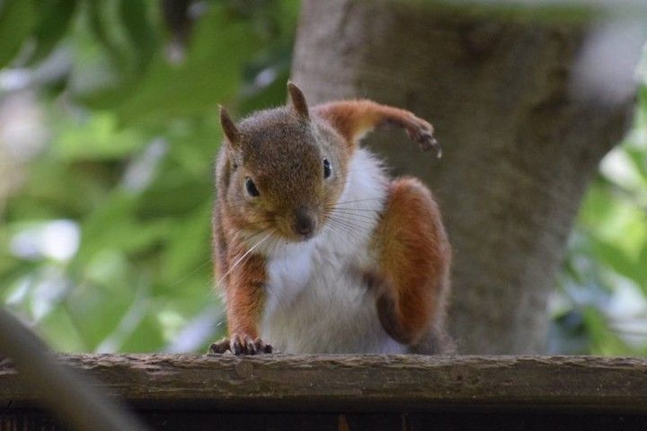Squirrel's interesting posture – Animal Memes