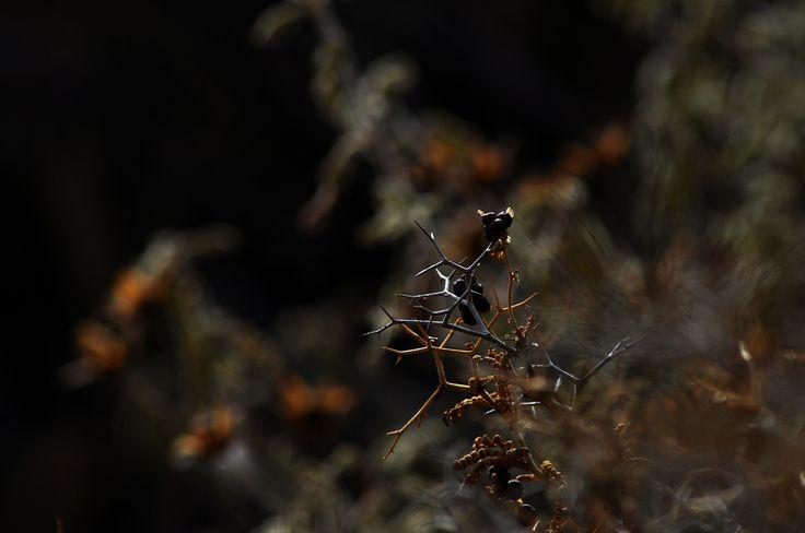 Abstract nature!! #abstract #nature #macro