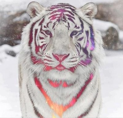 White snow tiger with rainbow and colors effect Fantasy
