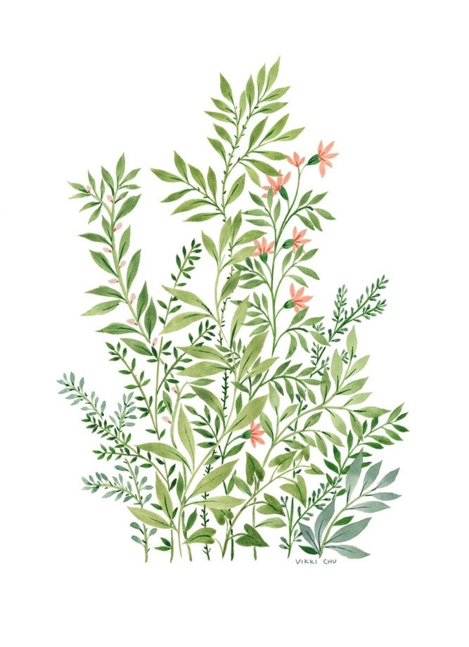 Plants 2 - A gallery-quality illustration art print by Vikki Chu for sale.