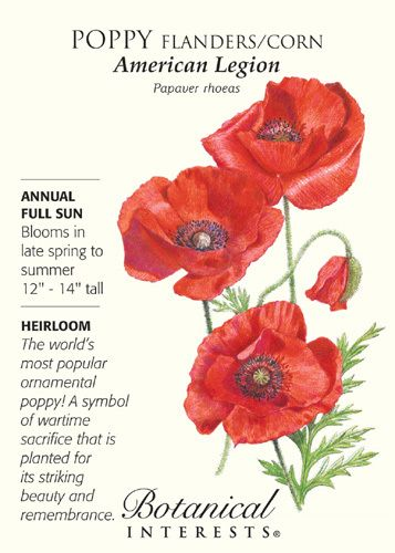 """Annual. John McCrae, a Canadian physician and soldier who served in World War I, immortalized the Flanders poppy, also known as corn poppy. His poem, """"In Flanders Fields"""" spoke of these red poppies as"""