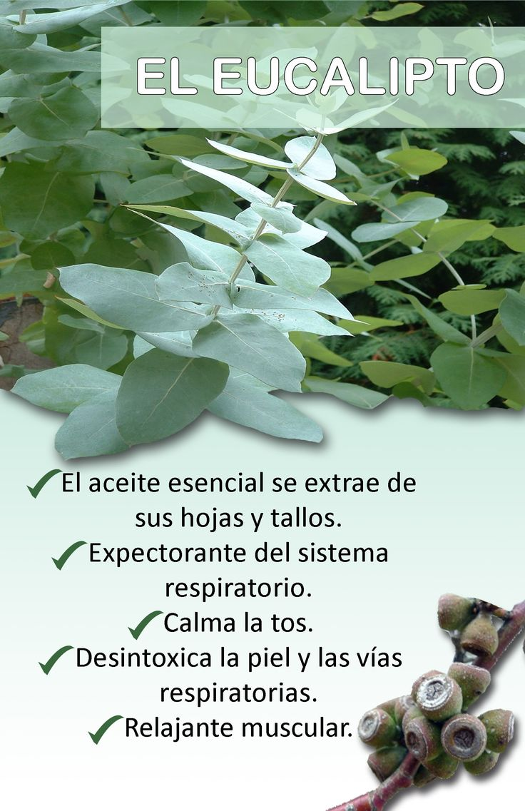 Usos y beneficios del eucalipto