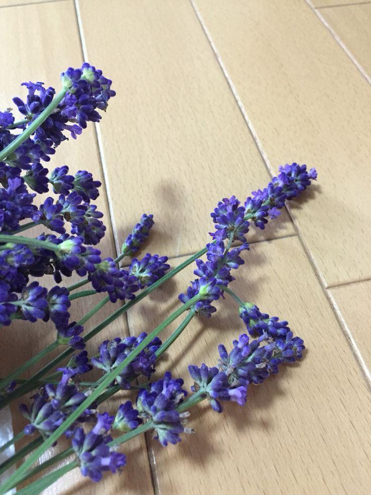 北海道の庭の無農薬ラベンダー(*^^*) ドライフラワーにします!