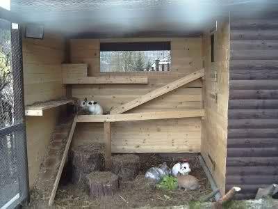 Ber ideen zu kaninchen forum auf pinterest for Kaninchenstall einrichten