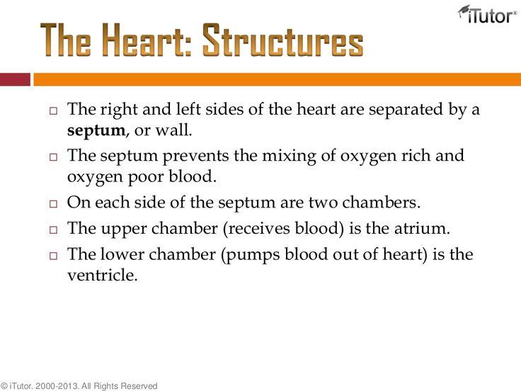 17 besten Heart Health Bilder auf Pinterest   Medizin, Gesunde ...