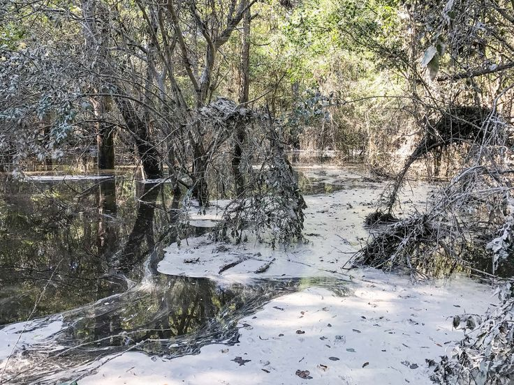 Waterkeeper Alliance and Sound Rivers have discovered a large coal ash spill into the Neuse River from the Duke Energy H.F. Lee facility,10 miles upstream of Goldsboro, NC.