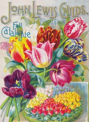 Tulips Vintage Seed Catalog Cover